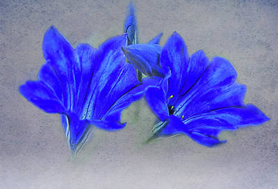 Photograph - Painted Gentians by Jacqi Elmslie