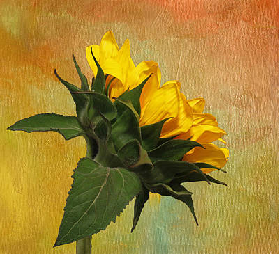 Photograph - Painted Golden Beauty by Judy Vincent