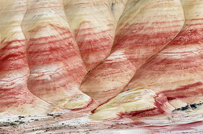Photograph - Painted Hill Bumps by Greg Nyquist