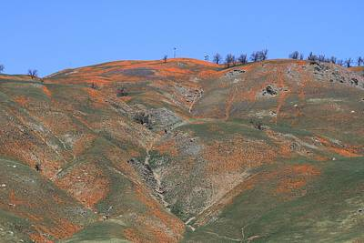 Photograph - Painted Hills by Diana Chase