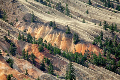 Photograph - Painted Hills by Jacqui Boonstra