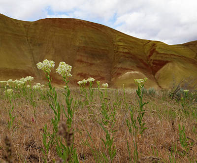 Painted Hills White Wildflowers Art Print by Jean Noren