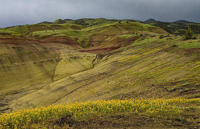 Photograph - Painted Hills Wildflowers by Jean Noren