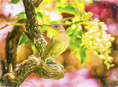 Painted House Wren Art Print by Daphne Sampson