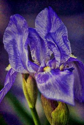 Photograph - Painted Iris by Jan Amiss Photography