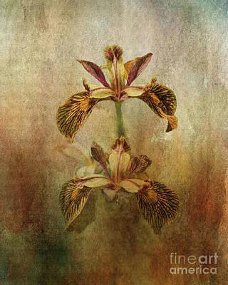 Digital Art - Painted Iris by Liz Alderdice