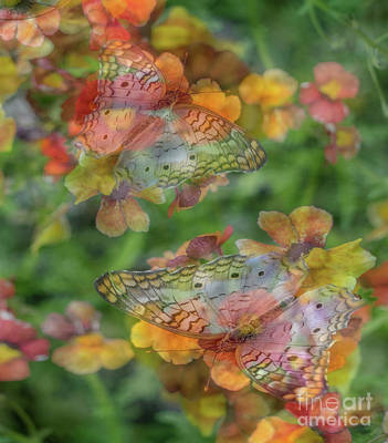 Photograph - Painted Ladies by Cathy Donohoue