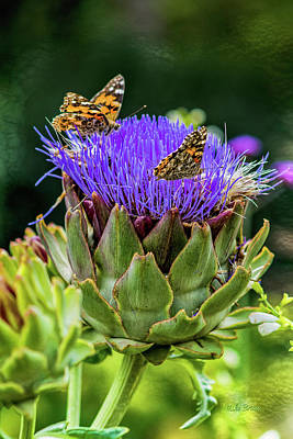 Photograph - Painted Ladies Love Artichokes by Mike Braun