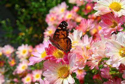 Photograph - Painted Lady 3 by Kathryn Meyer