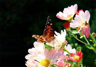 Photograph - Painted Lady Butterfly by Kathryn Meyer