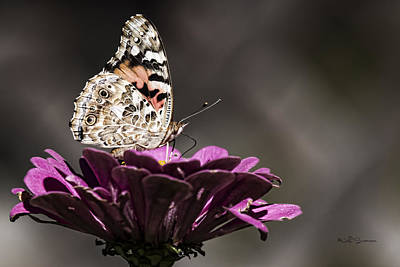 Photograph - Painted Lady by Jeff Swanson