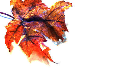 Photograph - Painted Leaf Series 1 by Anita Burgermeister