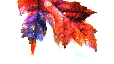 Photograph - Painted Leaf Series 4 by Anita Burgermeister
