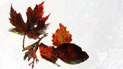 Photograph - Painted Leaf Series 5 by Anita Burgermeister