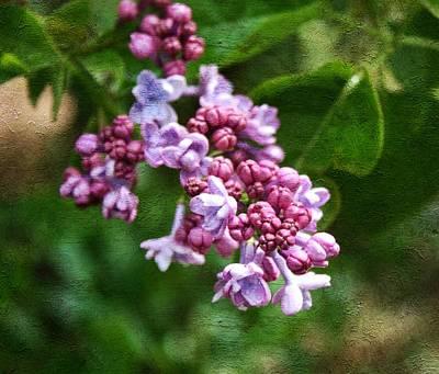 Purple Flowers Digital Art - Painted Lilac by Cathie Tyler