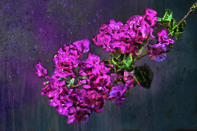 Photograph - Painted Magenta Bougainvillea  by HH Photography of Florida