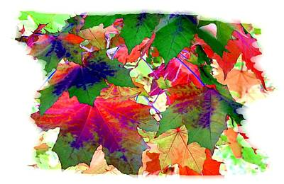 Maple Leaf Art Digital Art - Painted Maple Leaves  by Will Borden