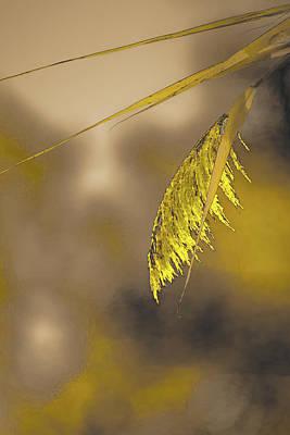 Photograph - Painted Marsh Grass by Bruce Pritchett