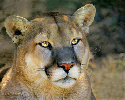 Photograph - Painted Mountain Lion by LeeAnn McLaneGoetz McLaneGoetzStudioLLCcom