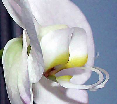Digital Art - Painted Orchid by Ellen Barron O'Reilly