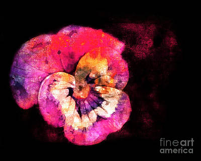 Photograph - Painted Pansy by Judi Bagwell