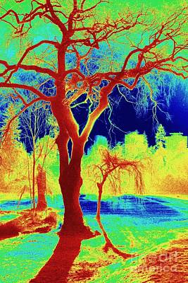 Photograph - Painted Park by Frank Townsley