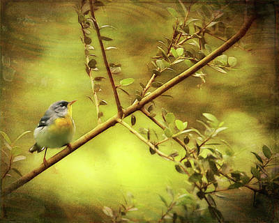 Photograph - Painted Parula by Judy Vincent