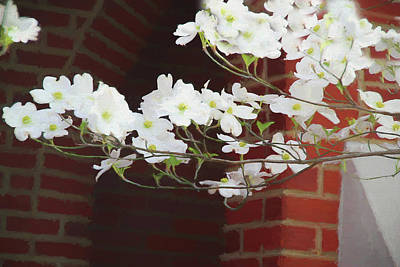 Photograph - Painted Pear Blossoms 5366 by Ericamaxine Price