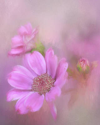 Photograph - Painted Pink Cinerarias by David and Carol Kelly