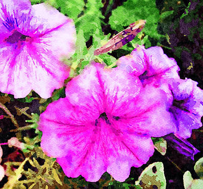 Mixed Media - Painted Pink Petunias by Femina Photo Art By Maggie