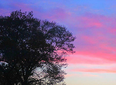 Photograph - Painted Pink Sky by Guy Ricketts