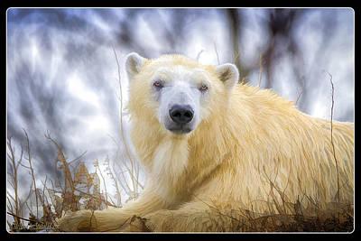 Photograph - Painted Polar Bear  by LeeAnn McLaneGoetz McLaneGoetzStudioLLCcom