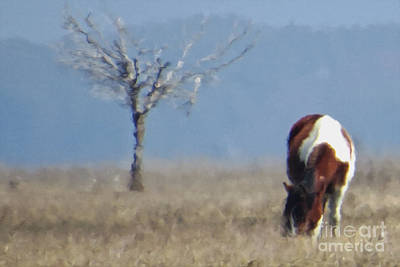 Photograph - Painted Pony 2 by Dawn Gari