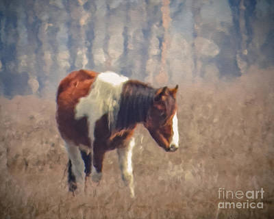 Photograph - Painted Pony by Dawn Gari
