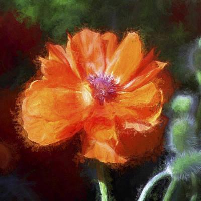 Painted Poppy Art Print