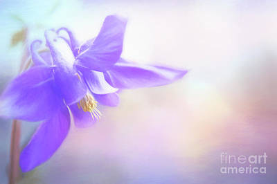 Photograph - Painted Purple Columbine by Anita Pollak