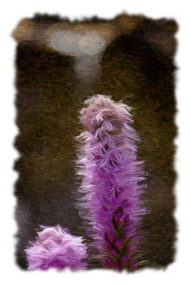Photograph - Painted Purple Flower by Jorge Perez - BlueBeardImagery
