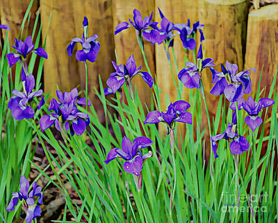 Photograph - Painted Purple Iris by Kathy M Krause
