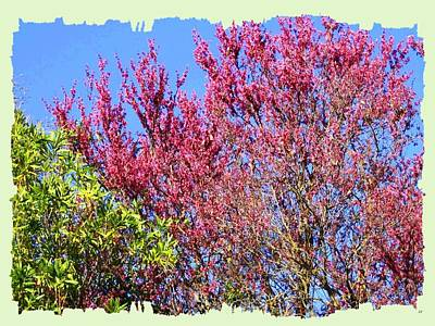 Digital Art - Painted Redbud by Will Borden