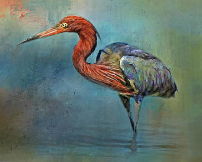 Photograph - Painted Reddish Egret by HH Photography of Florida