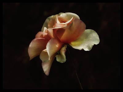 Painted Roses Art Print by Elaine Malott