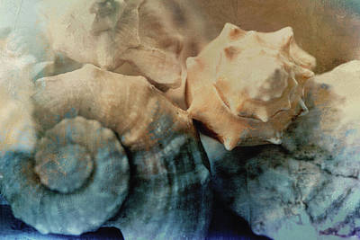 Painting - Painted Shells by Bonnie Bruno