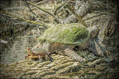 Photograph - Painted Snapping Turtle Surprize IIi  by LeeAnn McLaneGoetz McLaneGoetzStudioLLCcom