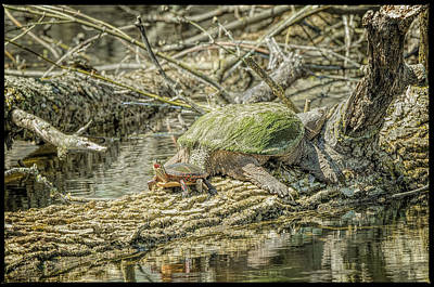 Photograph - Painted Snapping Turtle Surprize by LeeAnn McLaneGoetz McLaneGoetzStudioLLCcom