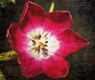 Purple Flowers Digital Art - Painted Star by Cathie Tyler