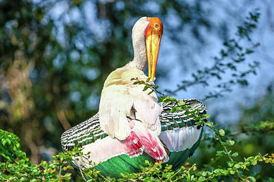 Photograph - Painted Stork by Nila Newsom