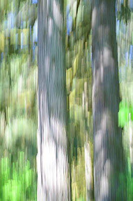 Photograph - Painted Streaked Trees by Tikvah's Hope