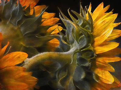 Art Print featuring the photograph Painted Sun Flowers by John Rivera