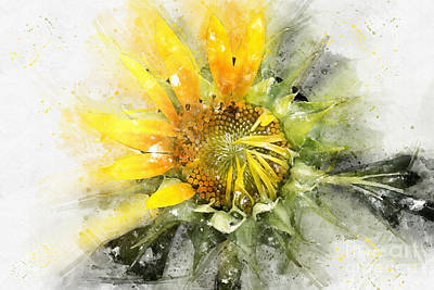 Digital Art - Painted Sunflower by Teresa Zieba
