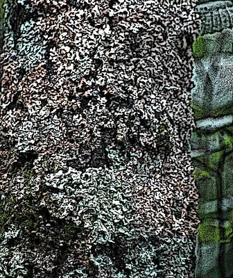 Photograph - Painted Treebark Woodcut by David Lane